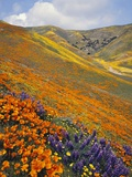 Hillside Wildflowers in Bloom Photographie par Craig Tuttle