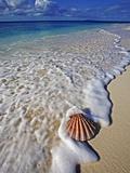 Scallop Shell in the Surf Fotografie-Druck von Martin Harvey