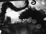 Tentacles of Octopus Fotografisk tryk af Henry Horenstein
