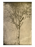 Drawing a Tree by Leonardo da Vinci Premium Giclee Print by  Bettmann