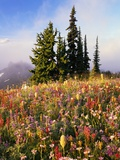 Evergreens and Blooming Wildflowers Photographic Print by Craig Tuttle