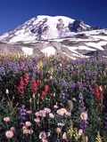 Flowers before Mount Rainier Photographic Print by Craig Tuttle