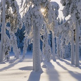 Winter Forest Photographic Print by Hans Strand