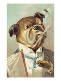 Postcard with a Smoking Bulldog and Bee Giclee Print