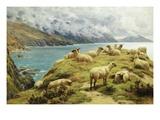 Sheep Reposing, Dalby Bay, Isle of Man Gicléedruk van Basil Bradley