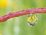 Flowers Reflected in Dew Drop Photographic Print by Craig Tuttle