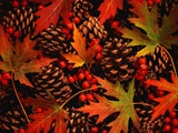 Autumn Leaves, Berries and Pinecones Fotografie-Druck von Mark Karrass