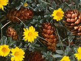 Arrangement of Flowers and Pine Cones Photographic Print by William Manning