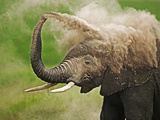 African Elephant Taking Dust Bath Photographic Print by Martin Harvey