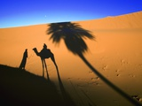 Shadow of Camel and Palm Tree Photographic Print by Martin Harvey