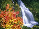 Autumn Leaves by Rushing Waterfall Photographic Print by Craig Tuttle