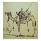 Camel Giclee Print by Rodolphe Bresdin