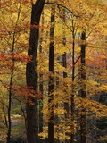 Deciduous Forest in Autumn Photographic Print by James Randklev