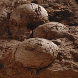 Dinosaur Eggs Photographic Print by Louie Psihoyos
