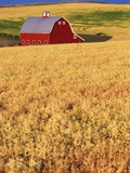 Red Barn on Rolling Hills Photographic Print by Stuart Westmorland