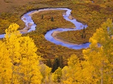 Aspen Trees Before Meandering River Photographic Print by William Manning