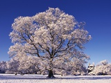 Snow-covered Tree in Belvoir Park Photographic Print by Geray Sweeney