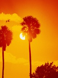 Orange Sunset and Silhouetted Palm Trees Photographic Print by Carl & Ann Purcell