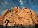 Joshua Tree and Cliffs Photographic Print by Kevin Schafer