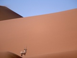 Lone Gemsbok Walking On Sand Dunes Photographic Print by Richard Olivier