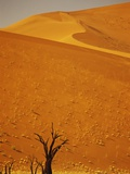 Camelthorn Trees Below Sand Dunes Photographic Print by Stuart Westmorland