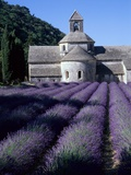 Abadía y campos de lavanda Lámina fotográfica por Michael Freeman