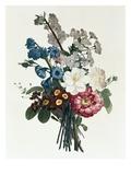 Ramo de Camellia y Auricula Lámina giclée por Jean Louis Prevost