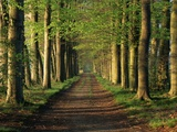 Tree-Lined Path Photographic Print by Dave Bartruff