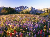 Wildflower Meadow and Tatoosh Range Photographic Print by Craig Tuttle
