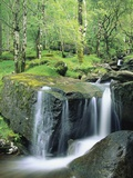 Gougane Barra Forest Park Waterfall Photographic Print by Richard Cummins