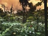 El Yunque Rainforest Photographic Print