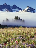 Flower Field Before Foggy Mountains Photographic Print by Craig Tuttle