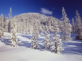Evergreen Trees Covered in Snow Photographic Print by Craig Tuttle