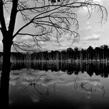 Trees by Lakeshore Photographic Print by David H. Wells