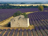 Stone Structure in Lavender Field Photographic Print by Bryan F. Peterson