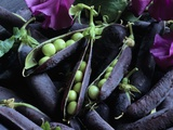 Pea Pods Photographic Print by Clay Perry