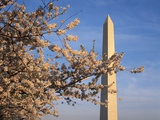 Cherry Tree near Washington Monument Photographic Print by Joseph Sohm