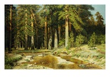 The Mast Tree Grove, Study Giclee Print by Ivan Ivanovich Shishkin