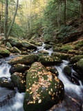Water Running Through Mossy Rocks Photographic Print by Gary Braasch