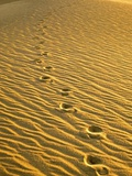 Footprints in Sand Dunes Photographic Print by  Owaki - Kulla