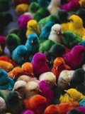 Chicks Colored for Indian Holiday Photographic Print by David H. Wells