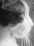 Cat's Head Photographic Print by Henry Horenstein