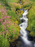 Wildflowers Blooming Along Rushing Creek Photographic Print by Craig Tuttle
