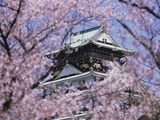 Cherry Blossoms in Front of Osaka Castle Photographic Print by Robert Essel