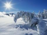 Snow on Trees at Lower Geyser Basin Photographic Print by Jeff Vanuga