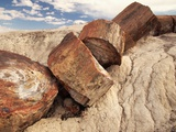 Petrified Logs Photographie par Joe McDonald
