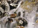 Trees Covered in Ice by Cascade Photographic Print by Craig Tuttle