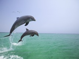 Bottlenosed Dolphins Breaching Photographic Print by Stuart Westmorland