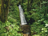 Waterfall in Lush Forest Photographic Print by Craig Tuttle