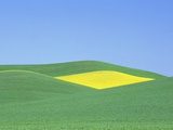 Palouse Hills in Growing Season Photographic Print by Terry Eggers
